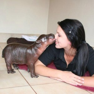 NAWHLA: North American Woman-Hippo Love Association